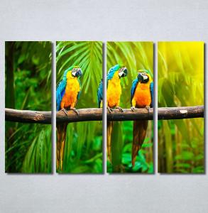 Slike na platnu Papagaji Are Nina30249_4