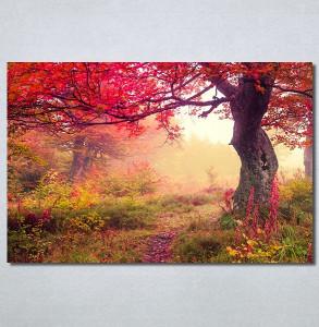 Slike na platnu Prelepa jesen u šumi Nina30244_P