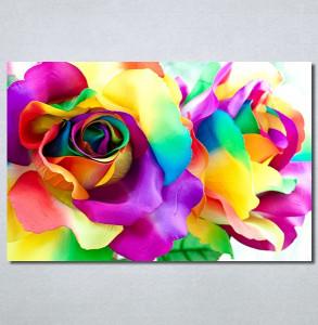 Slike na platnu Šarena ruža Nina30288_P