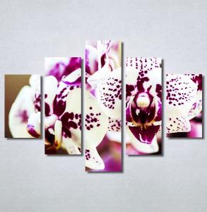 Slike na platnu Šarene orhideje Nina30217_5