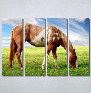 Slike na platnu Slika konja Nina30358_4