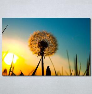 Slike na platnu Žuti maslacak Nina30235_P