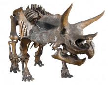 Proiector de buzunar - Dinozauri