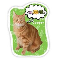 Joc de carti - Adopta o pisicuta!