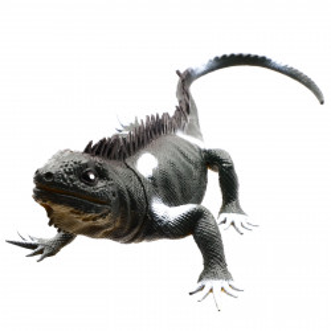 Figurina Reptila, Iguana, Negru, 24 cm