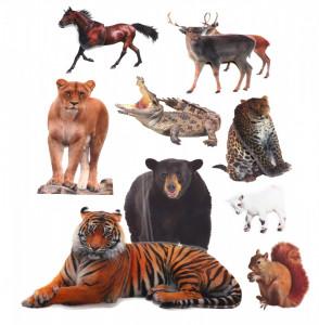 Set Sticker 8D pentru copii, Animale, decor camera, ST-HK801, Multicolor