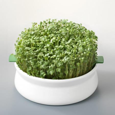 Poze Vas ceramic pentru germinare Germline pentru a germina seminte mucilaginoase