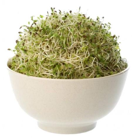 Poze Alfalfa seminte bio pentru germinat Germline 150g