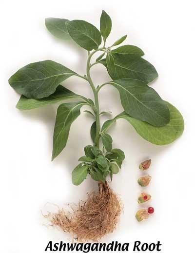 Poze Ashwagandha pulbere bio 125g- Produs recomandat de Ligia Pop