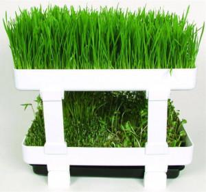 Lexen Healthy Sprouter germinator