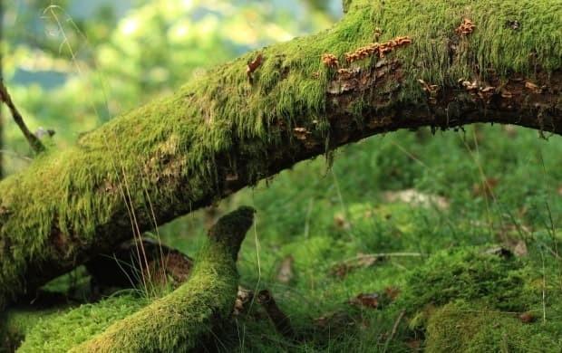 Medicina forestiera si beneficiile sale pentru sanatate si imunitate
