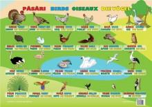 Plansa Păsări