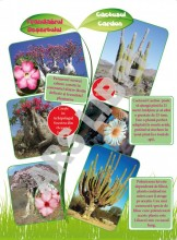 Curiozități despre plante
