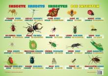 Planșa Insecte