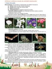 Ştiinţe ale naturii - Caiet de lucru, clasa a IV-a