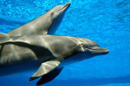 Fototapet, Delfinii frumoși în apă