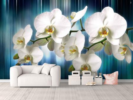 Fototapet, Orhidee albă pe un fundal albastru