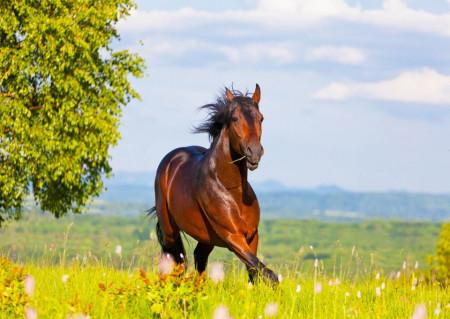 Fototapet, Un cal ce galopează în pădure