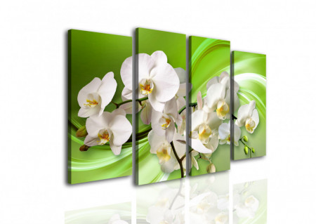 Multicanvas, Orhidea albă pe un fundal verde