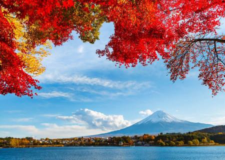 Fototapete Crengi cu flori multicolore pe fundalul munților