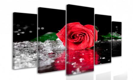 Multicanvas, Trandafir roșu în picături de apă