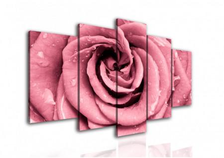 Multicanvas, Trandafirul roz