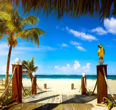 Fototapet Mare, Dimineață însorită pe fundalul palmierilor și al plajei