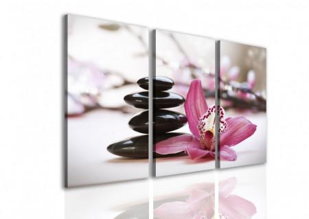 Multicanvas, Orhideea roz și pietre negre.