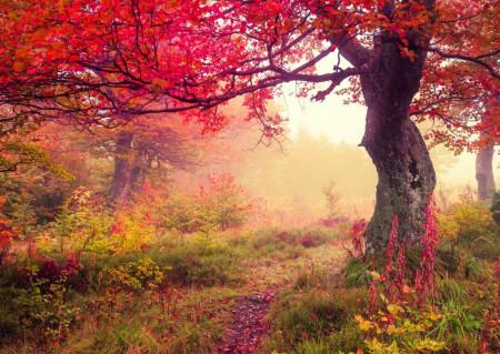 Fototapet Natura, Peisaje, Pădure de toamnă