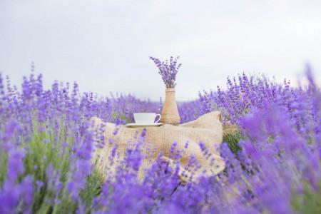 Fototapet Natura, Peisaje, Un câmp cu lavandă