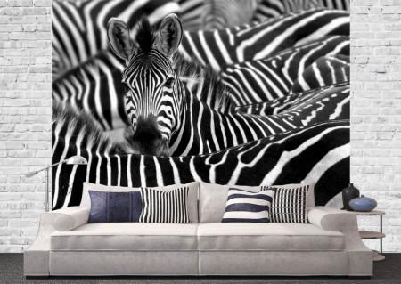 Fototapet, O turmă de zebre