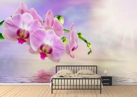 Fototapet, Orhidee roz la răsăritul soarelui