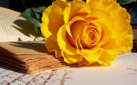 Multicanvas, Trandafir cu culoarea galbenă pe masă