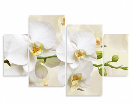 Tablou modular, Orhidee albă pe un fundal bej.