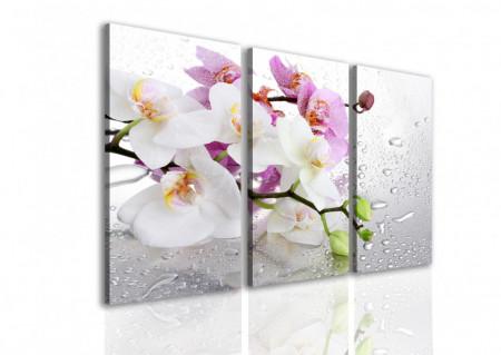 Tablou modular, Orhidee roz și albă