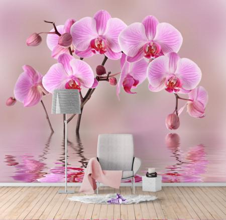 Fototapet, O orhidee frumoasă roz