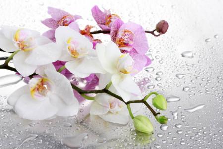 Multicanvas, Orhidee roz și albă.