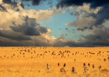 Fototapet Animale, Savana și cerul acoperit de nori