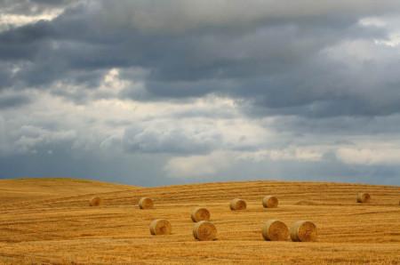 Fototapet, Câmpul și cerul înnorat