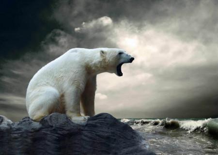 Fototapet, Ursul polar pe fundalul cerului înnorat