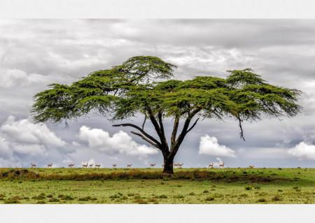 Fototapete Copac în câmp