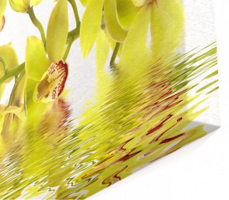 Multicanvas, Orhideea galbenă în reflectarea apei