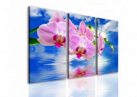 Tablou modular, Orhidee roz pe un fundal albastru.