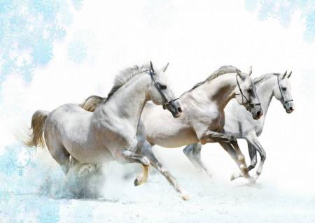 Fototapet, Cai în galop pe fundal alb