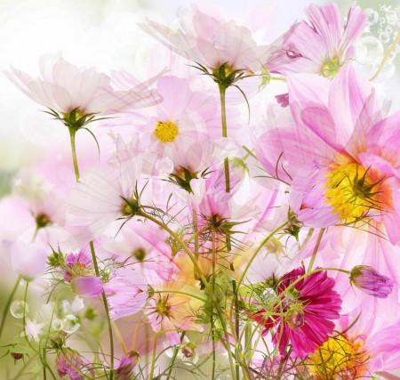 Fototapet, Flori delicate