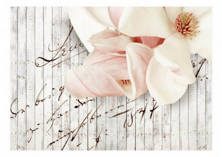 Fototapet, Flori roz delicate