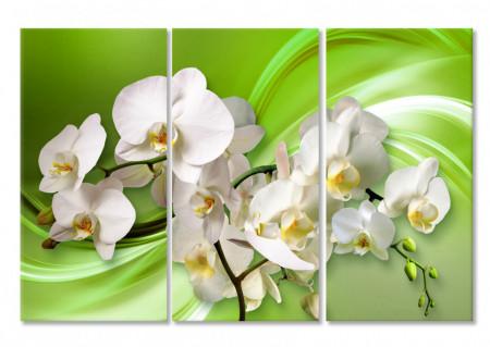 Multicanvas, Orhideea albă pe un fundal verde.