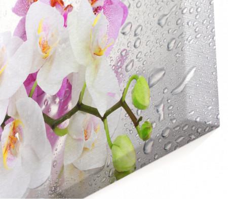 Multicanvas, Orhideea roz și albă