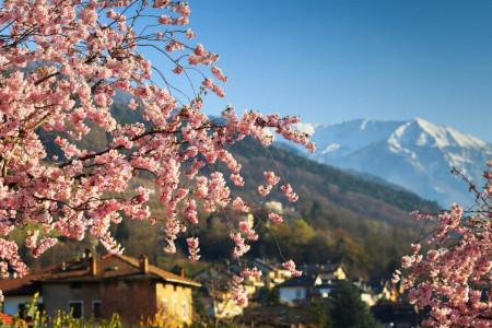 Fototapete 3D, Sakura japoneză