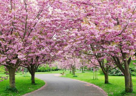 Fototapete Alee primăvara